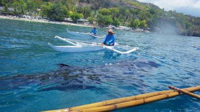 CEBU Olob Requins Baleines