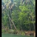 Nuts Huts Loboc River Bohol Philippines (12)