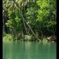 Nuts Huts Loboc River Bohol Philippines (14)